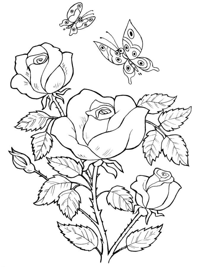 Розы с бабочками раскраска