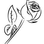 Роза бутон раскраска