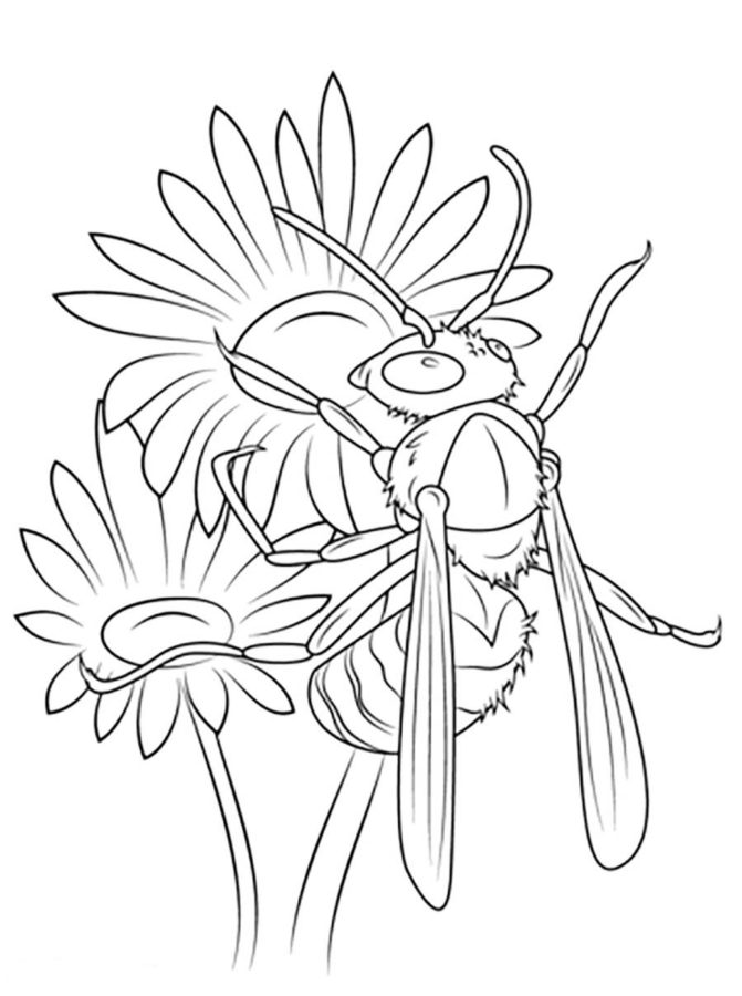 Раскраска шмели и пчелы