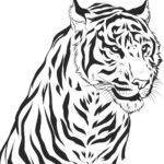 Уссурийский тигр раскраска