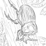 Жук носорог раскраска