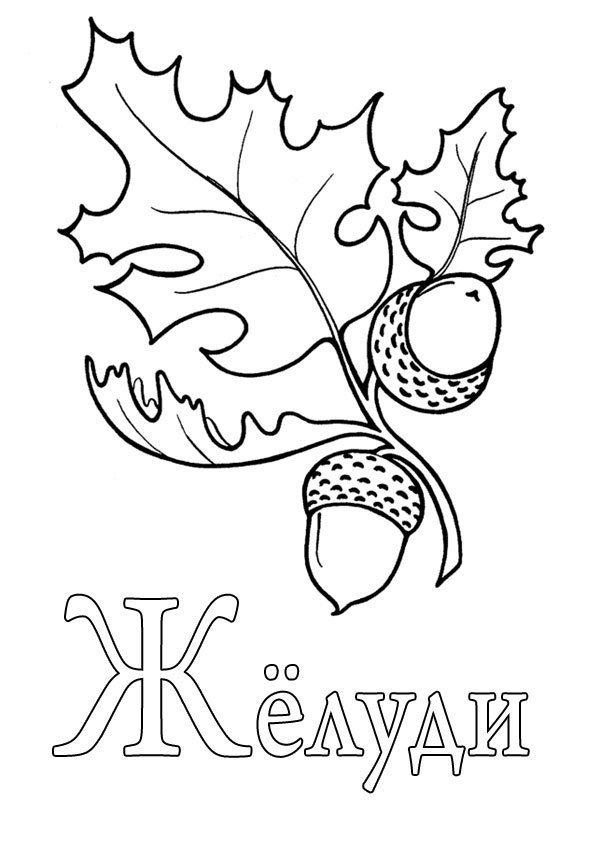 Буква Ж жёлуди