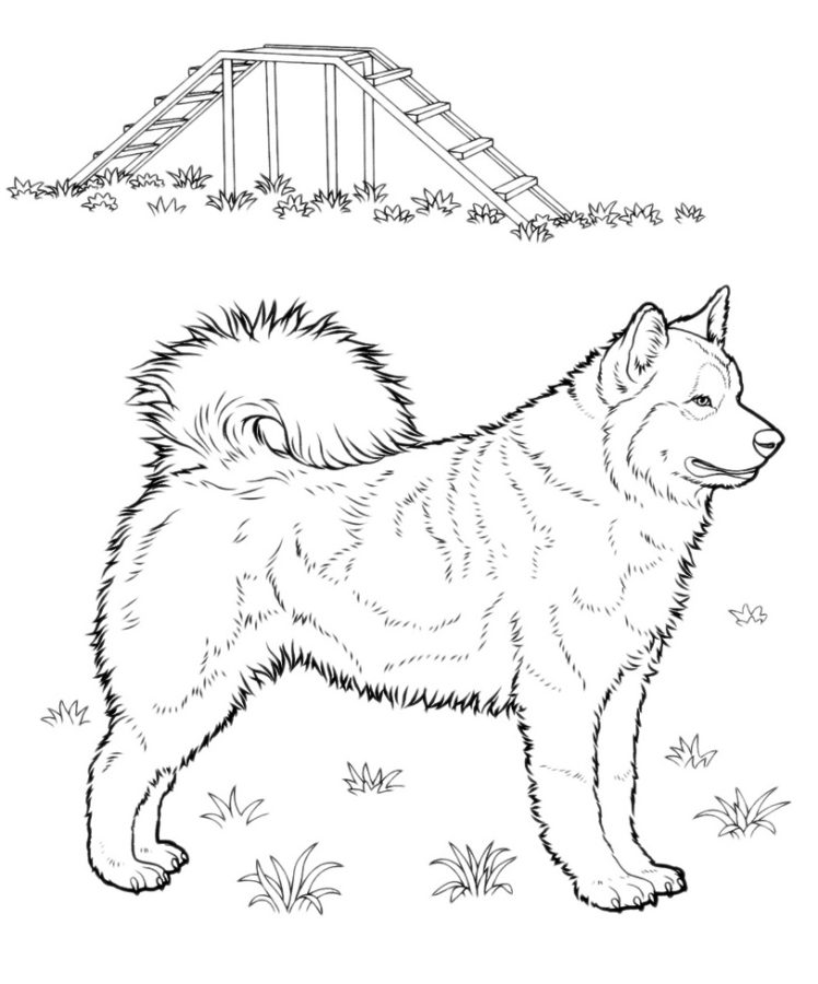 Буква Х собака породы хаски