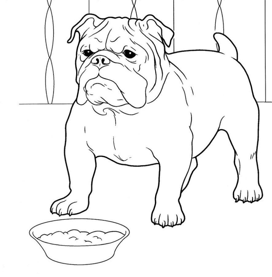 Раскраска собака Бульдог