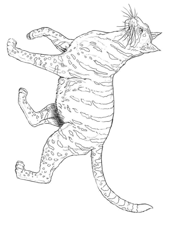 Раскраска дикая кошка