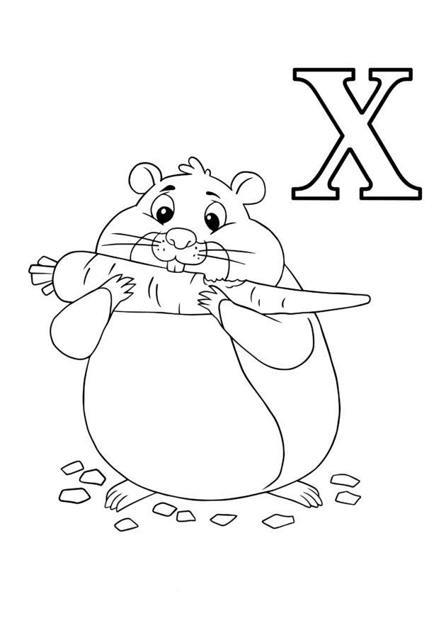 Буква Х хомяк ест морковь