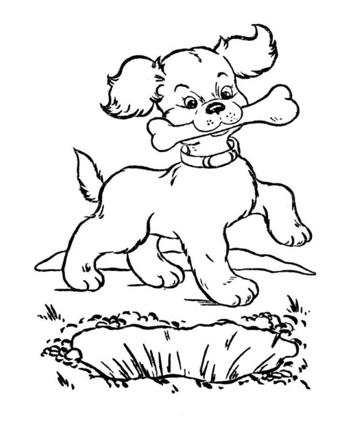раскраски косточка для собаки