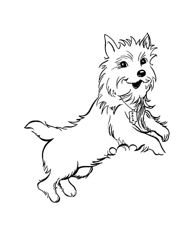 Раскраска маленькая собака
