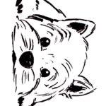 Раскраска морда собаки
