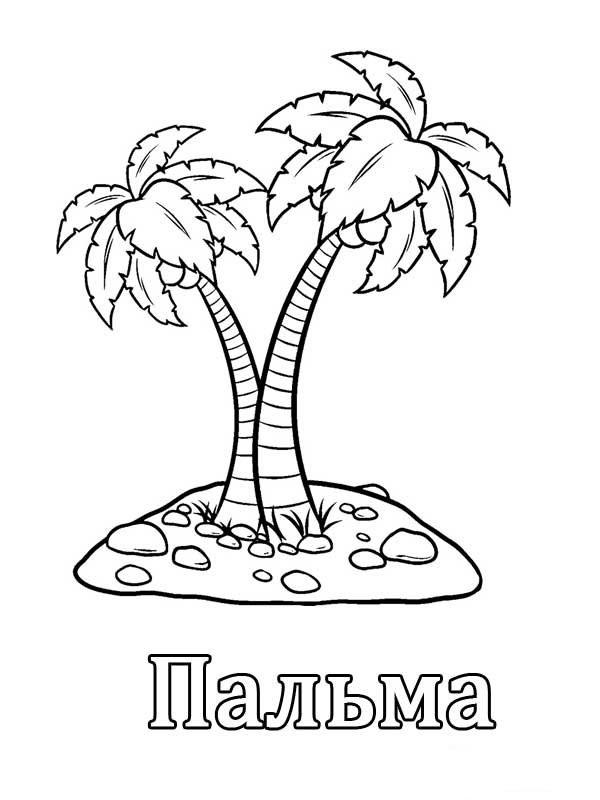 Буква П пальмы
