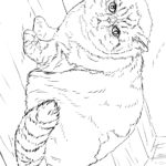 Раскраска Персидская кошка