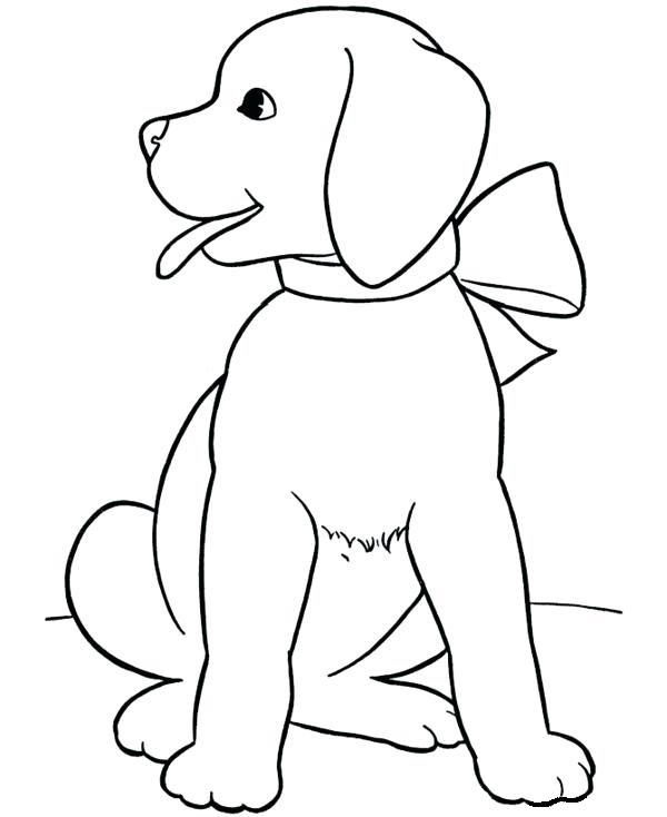 Раскраска щенок лабрадора
