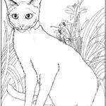 Раскраска Сиамская кошка