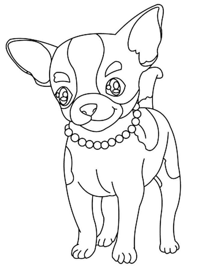 Раскраска собаки Чихуахуа