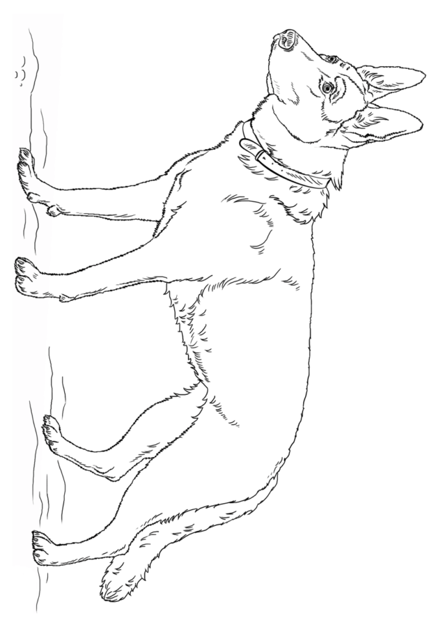 Раскраска собаки немецкая овчарка