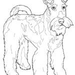 Раскраски собаки терьер