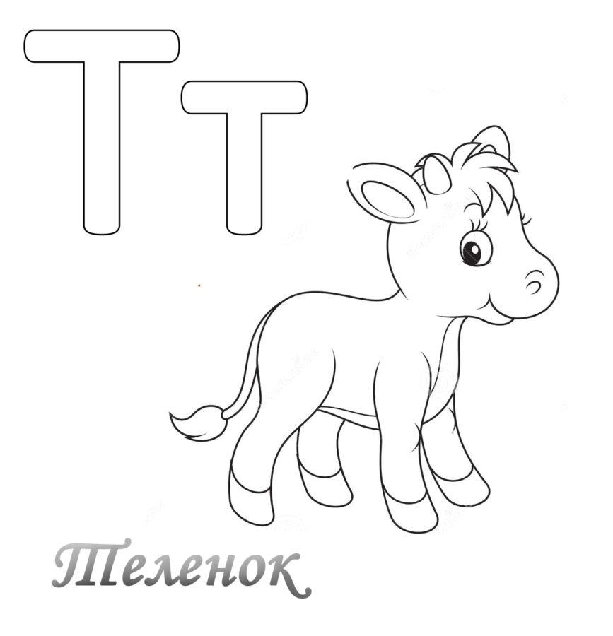 Буква Т с телёнком