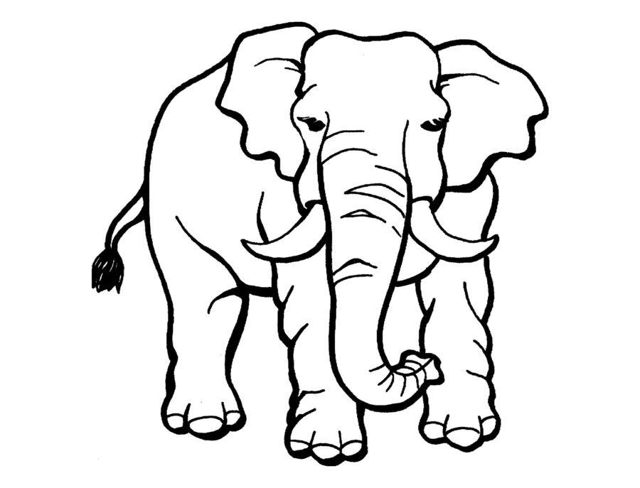 Африканский слон раскраска