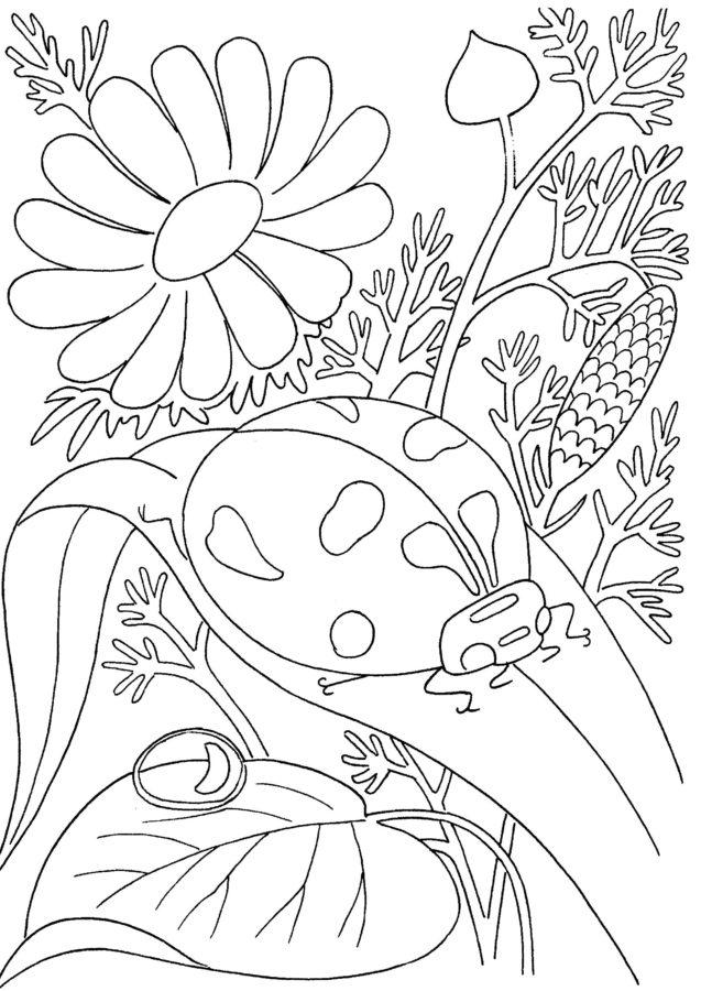 Божья коровка на листе раскраска