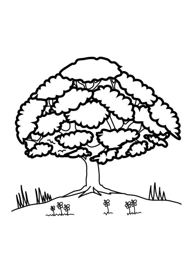 дуб раскраска для детей