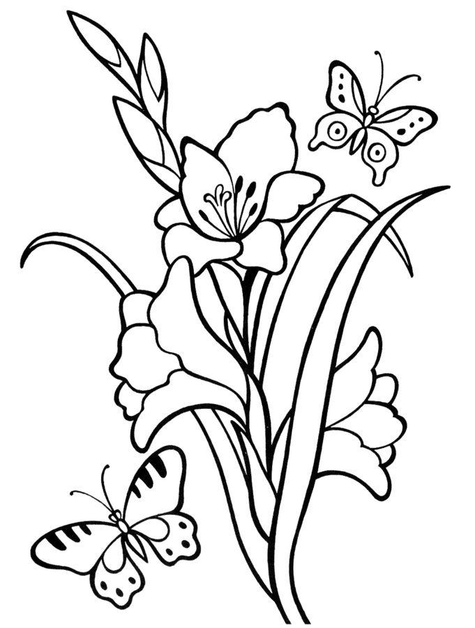 Гладиолус раскраска