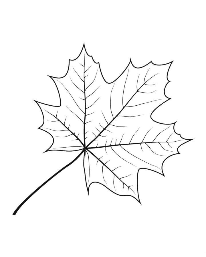 Лист клена раскраска