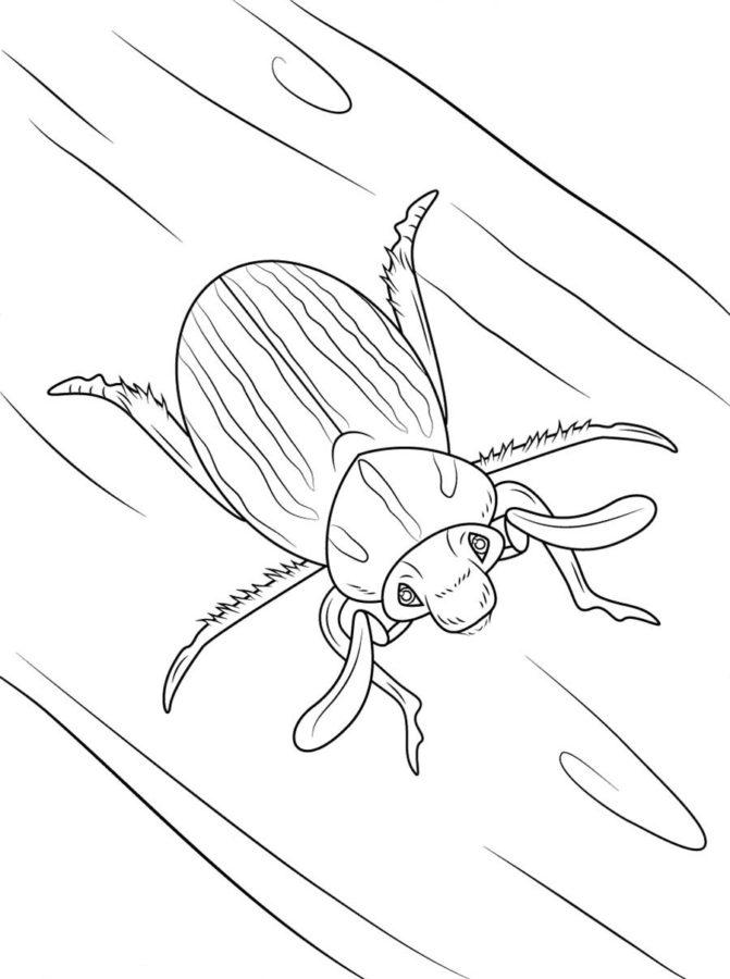 Майские жуки раскраска