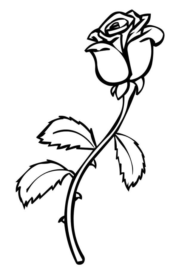 Маленькая роза раскраска