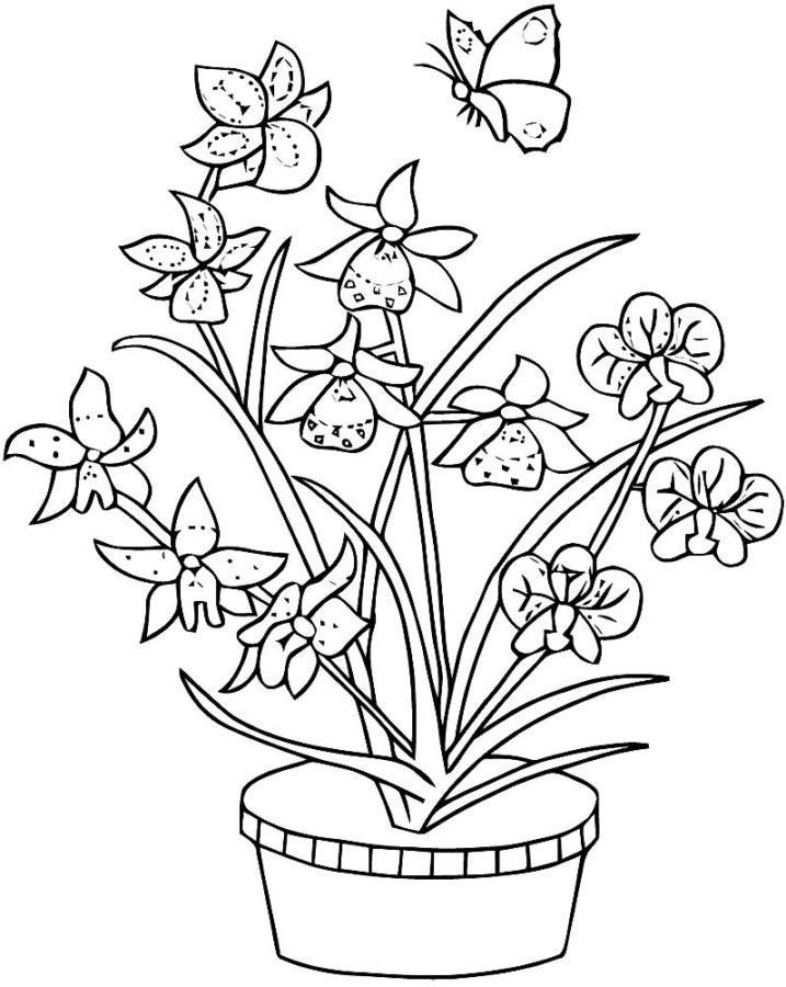 Орхидея раскраска
