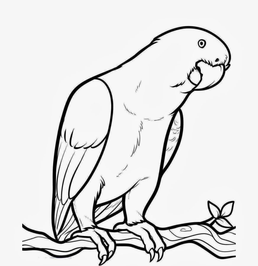 Попугай Жако раскраска