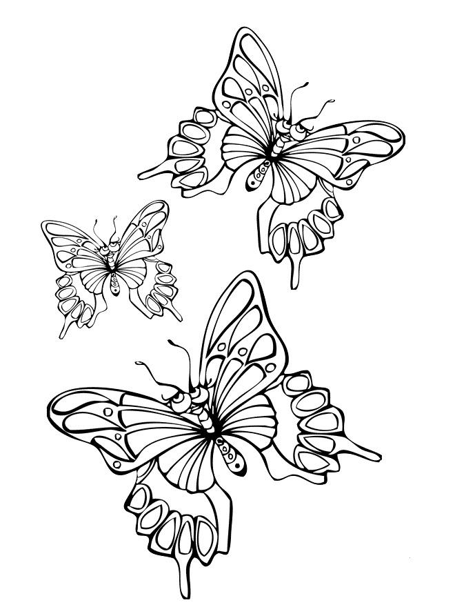 Раскраска 3 бабочки