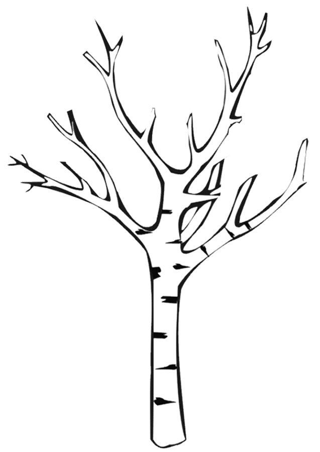 Раскраска берёзы без листьев