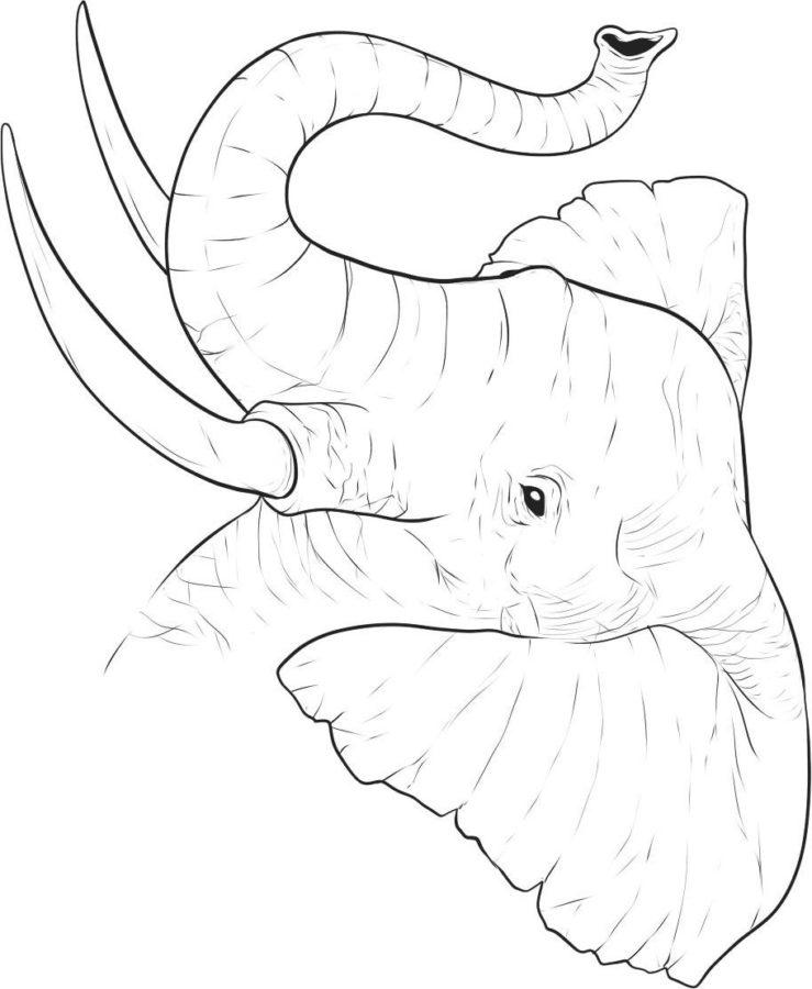 Раскраска хобот слона
