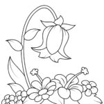 Раскраска Колокольчик цветок