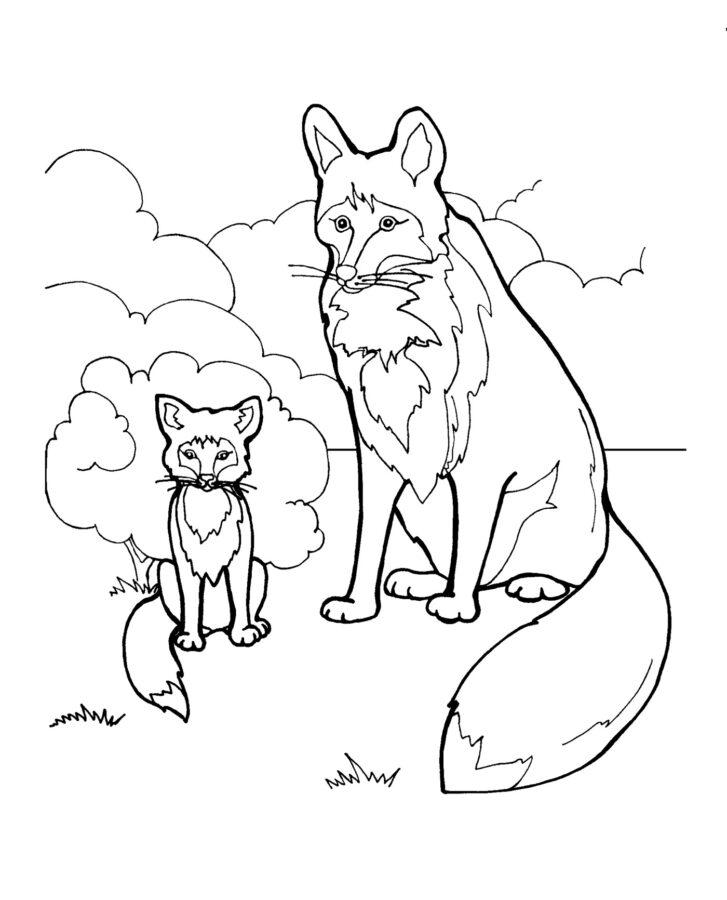 Раскраска лиса и лисёнок