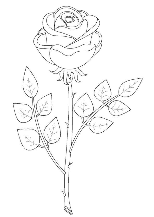 Раскраска листа розы