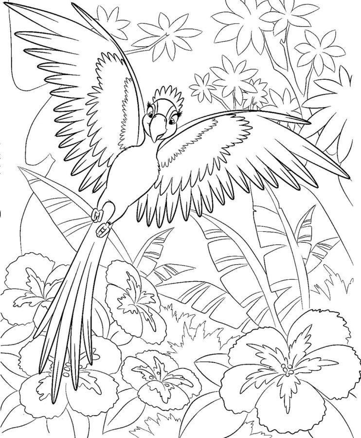 Раскраска попугай из мультика