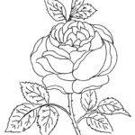 Раскраска роза цветок