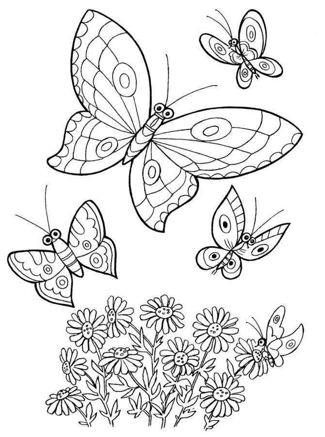 Раскраски бабочки красивые