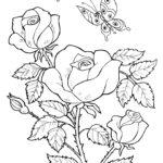 Рисунок розы с бабочками раскраска