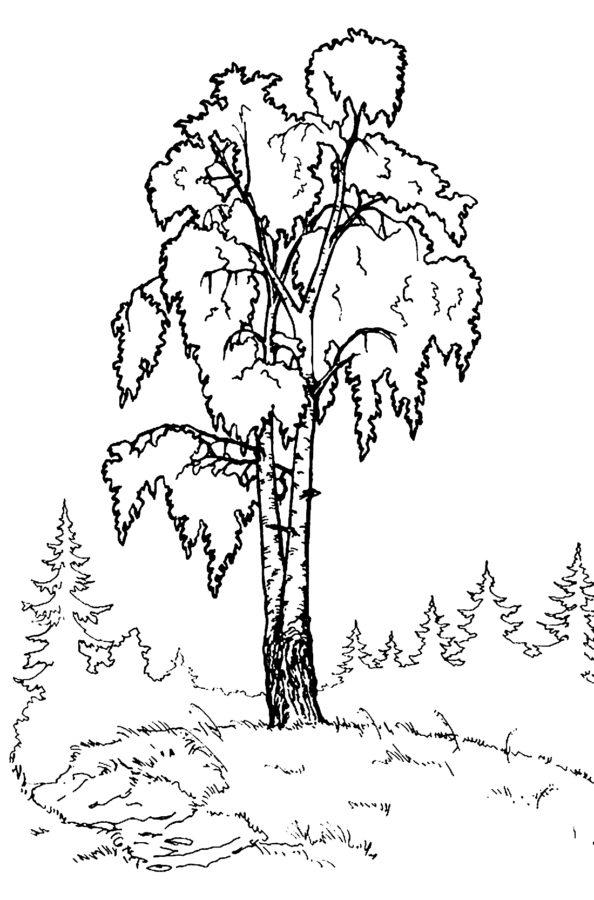 Русская береза раскраска
