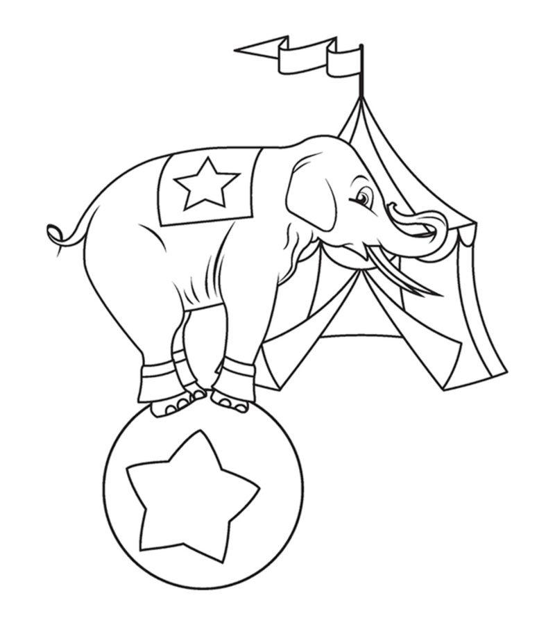 Слон в цирке раскраска