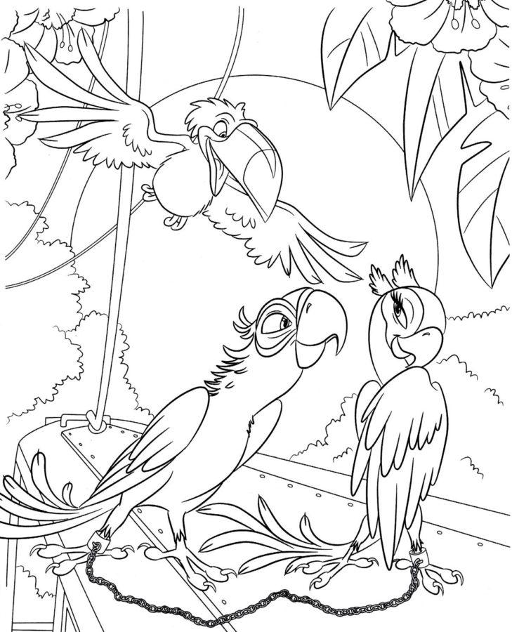 Три попугая раскраска